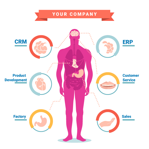 JulienRio.Com - Your company anatomy