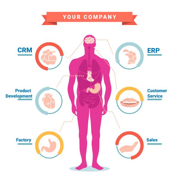 JulienRio.Com - Your company anatomy
